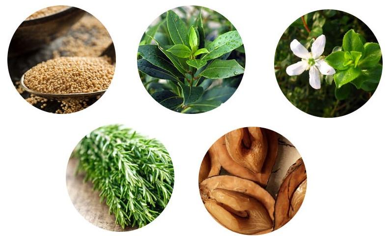 Растения, входящие в состав средства