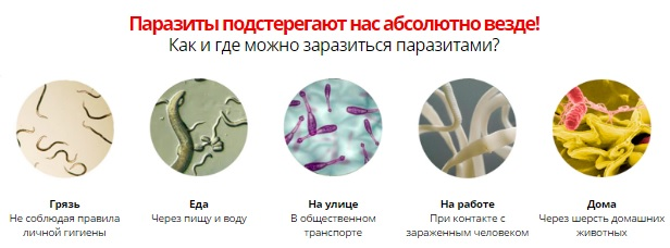 Места заражения гельминтами