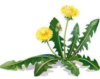 Безопасное решение деликатной проблемы — травы от запора