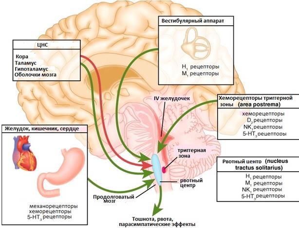 Рецепторы тошноты