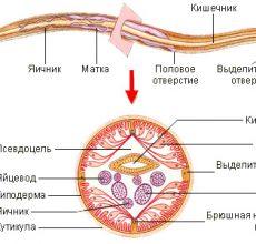 Обзор лекарств от аскарид