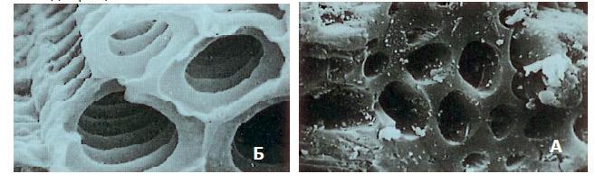 Поры угля под микроскопом