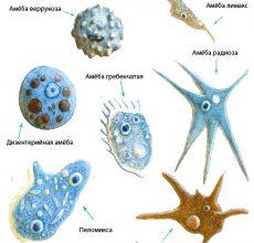 Краткие характеристики лекарств от паразитов