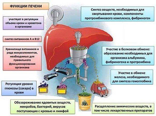 Функции органа