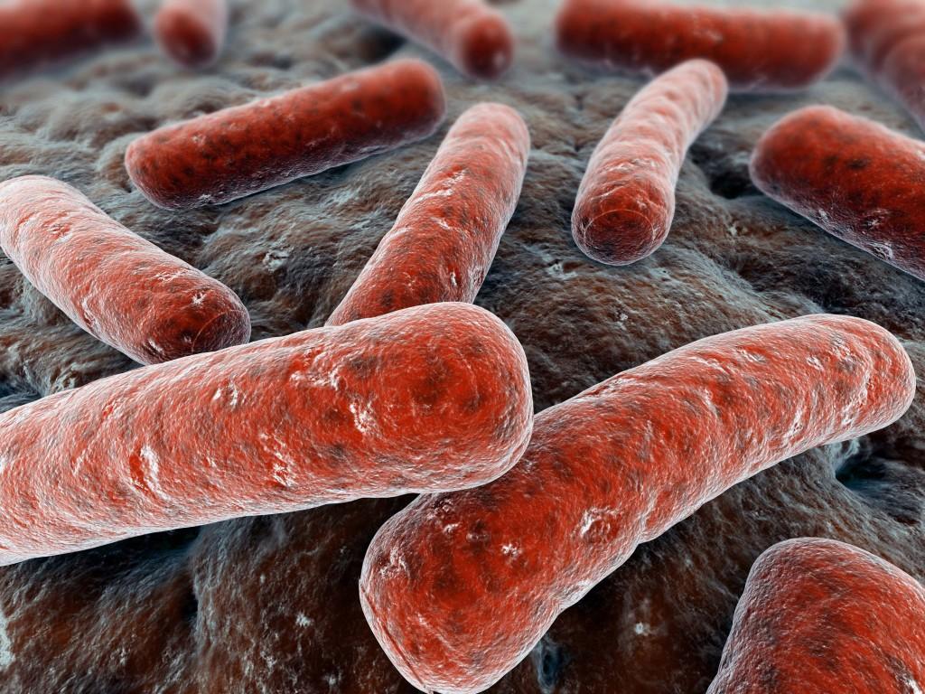 Палочковидная бактерия