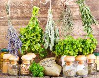 Эффективно ли лечение кисты печени народными средствами?