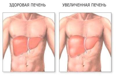 Размеры органа