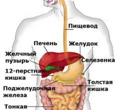 О процесс пищеварения — что это?