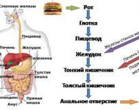 Список полезных продуктов для печени